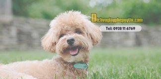 Thủ tục thành lập công ty dịch vụ chăm sóc thú nuôi